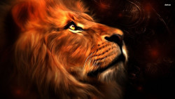 Lion Animal Wallpaper 31
