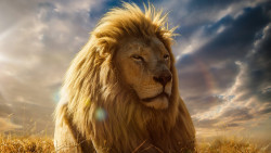 Lion Animal Wallpaper 34