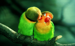 Lovely Parrot Wallpaper
