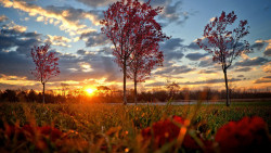Sunset and Autumn Tree HD Wallpapers 1080p