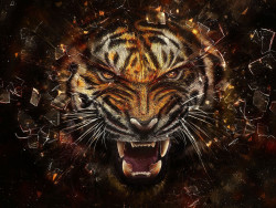Tiger Animal Wallpaper 11