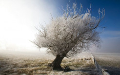 A Frosty Tree in A frosty day