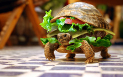 Cheeseburger funny wallpaper