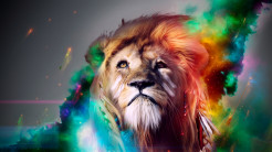 Lion Animal Wallpaper 13
