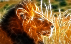 Lion Animal Wallpaper 15