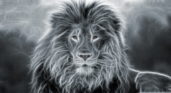 Lion Animal Wallpaper 24
