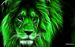 Lion Animal Wallpaper 33