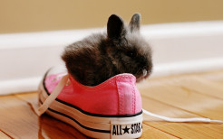Rabbits In Shoes