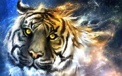 Tiger Animal Wallpaper 14