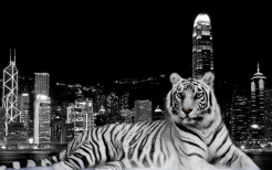 Tiger Animal Wallpaper 6