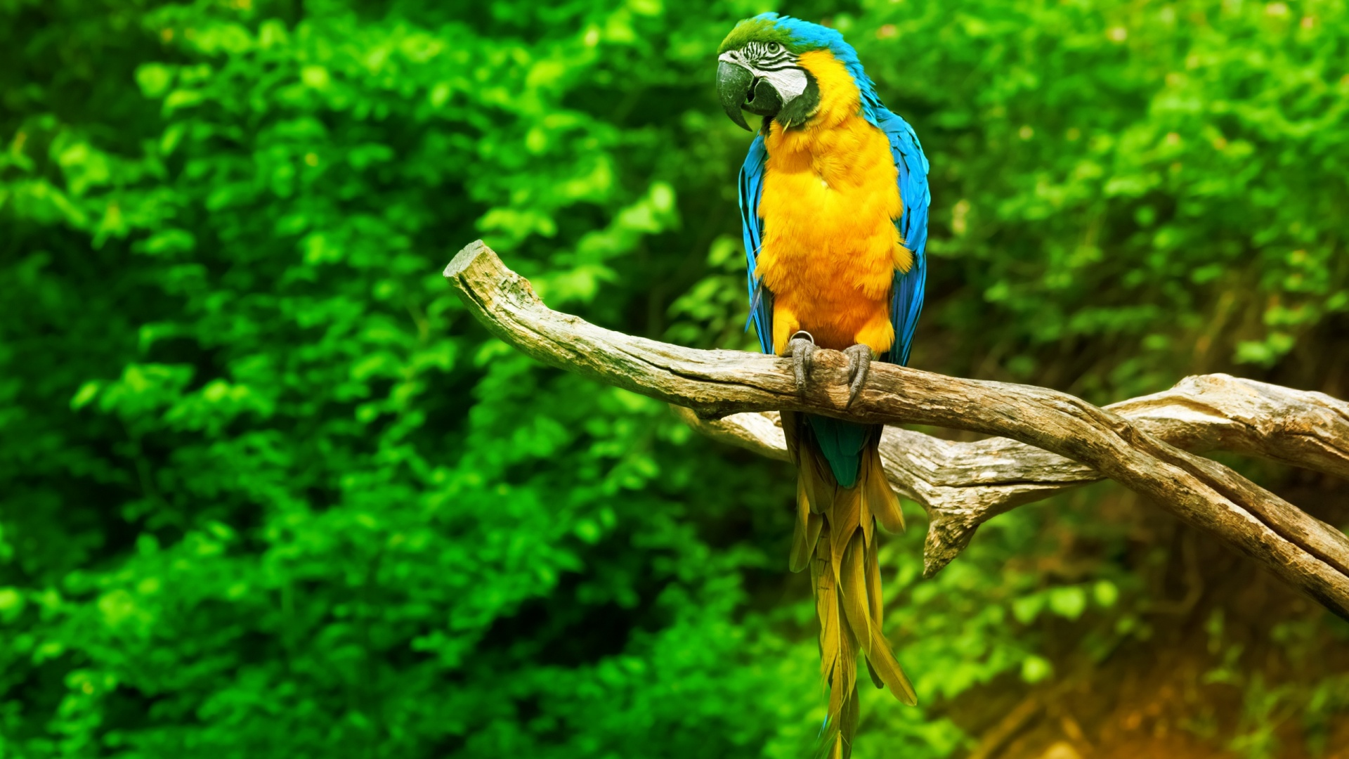 Download Best Cute Parrot Wallpaper Wallpapers Images Free
