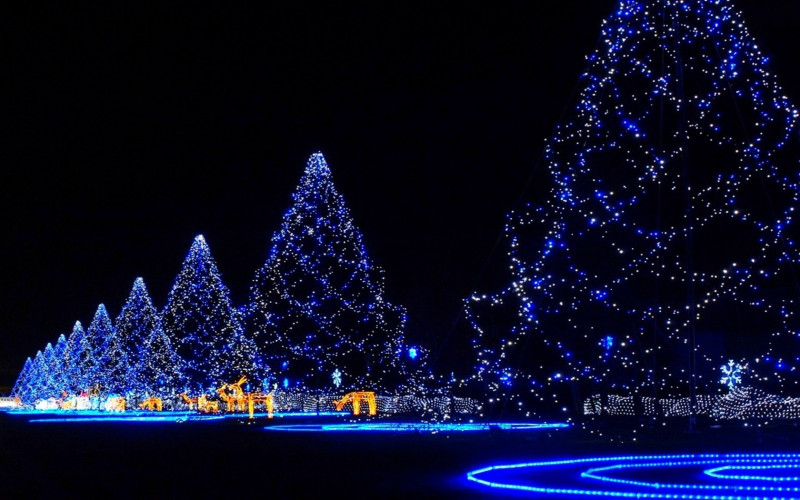 Christmas Beautifull Tress